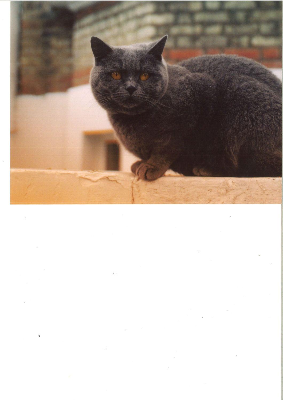 blucat3