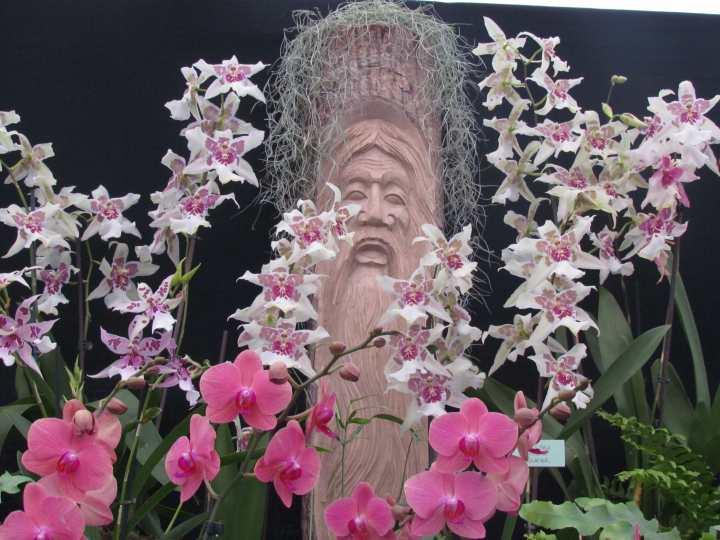 orchidtrance