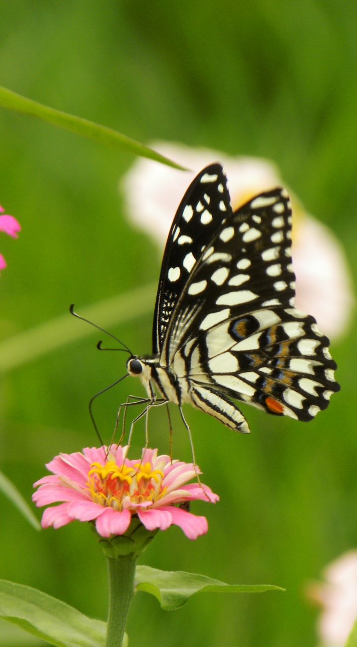 whitebutterflies 343