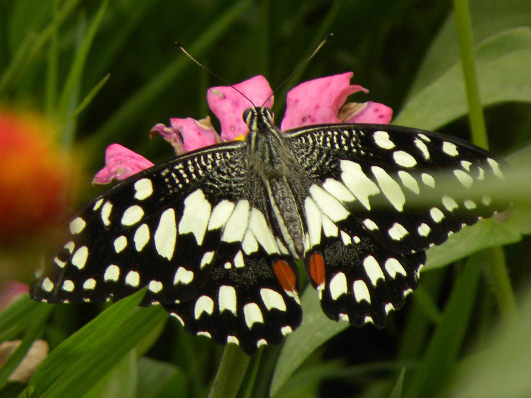 whitebutterflies 356