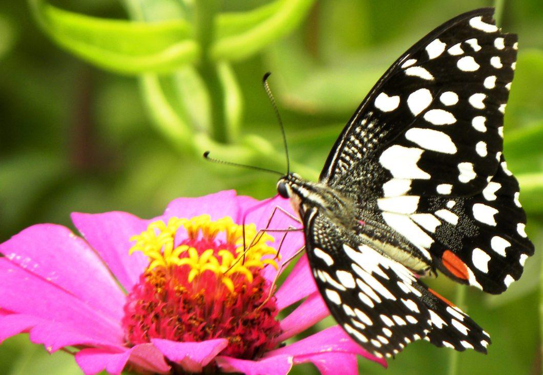 whitebutterflies 414