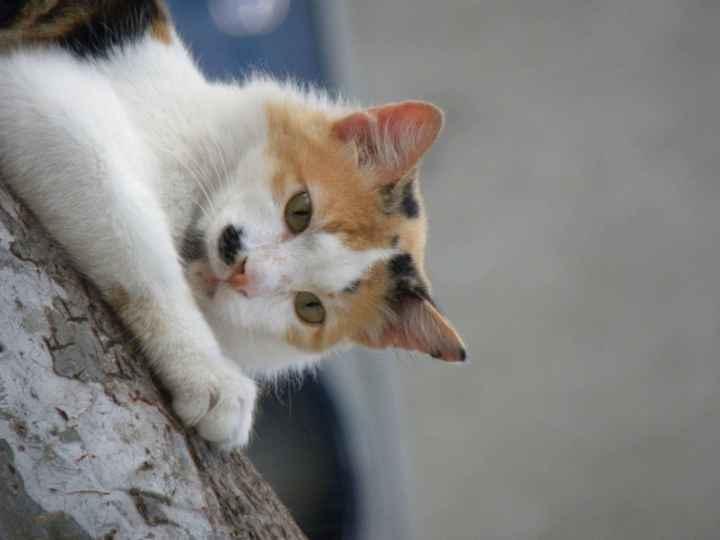 catwatch5
