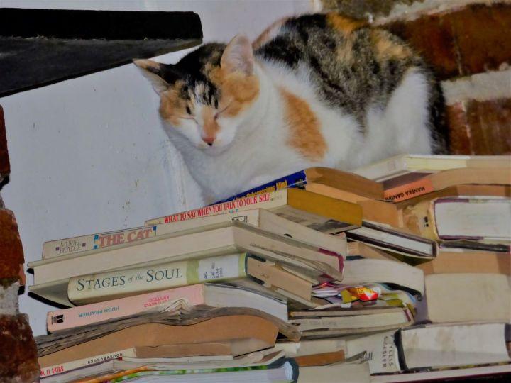 bookchunribb