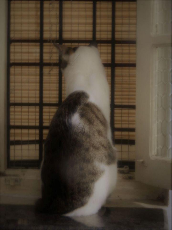 windowcat 008 (2)